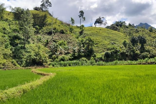 Area persawahan di Desa Ralleanak Utara Mamasa. Dok: Timurterkini.com